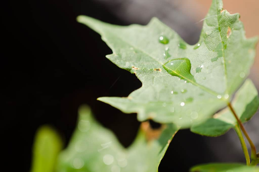 Green leaves with rain drops on them