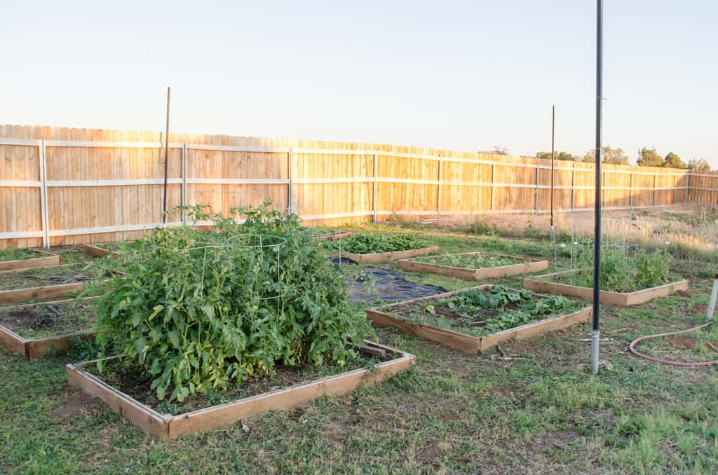 A backyard vegetable garden in full bloom.