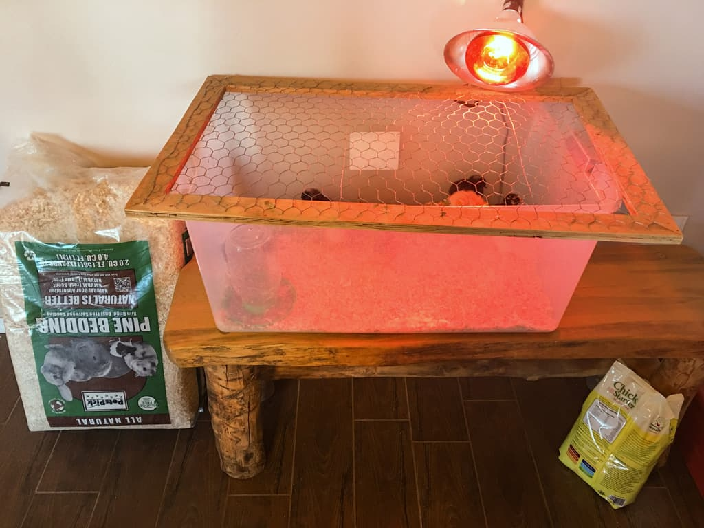 Do you plan on raising chickens on your homestead? Making chick care a priority now will pay off with healthy hens (and eggs) this summer. Baby Chicks   Homestead Chickens   Chick Care