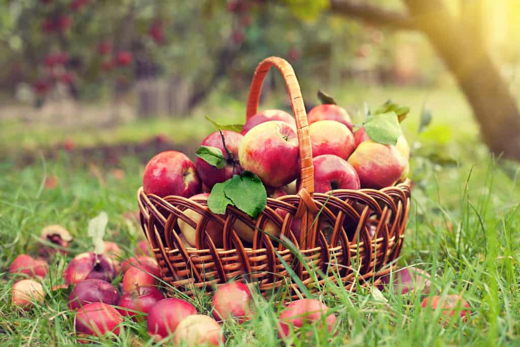 Increase Orchard Care for Fabulous Fruit this Fall