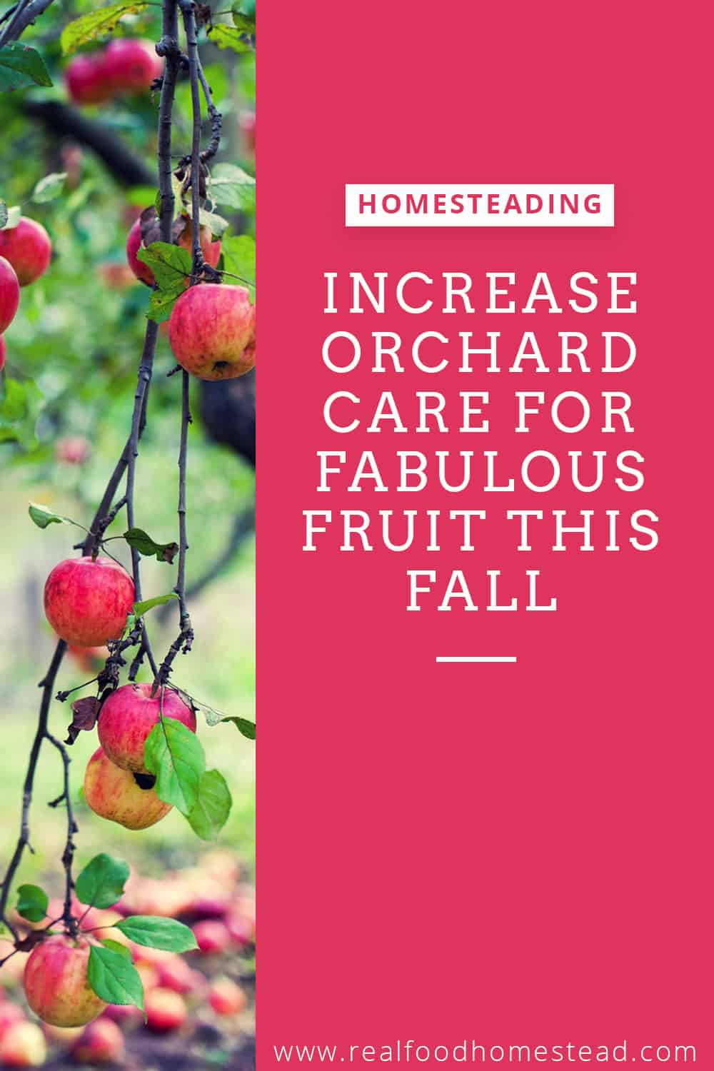 orchard care pin