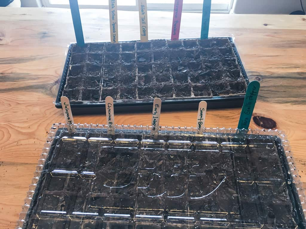 Are you ready for spring to get here so you can get your garden going? Seed starting in March will get your ready for an abundant harvest in September! Seed Starting | Gardening | Abundant Harvest