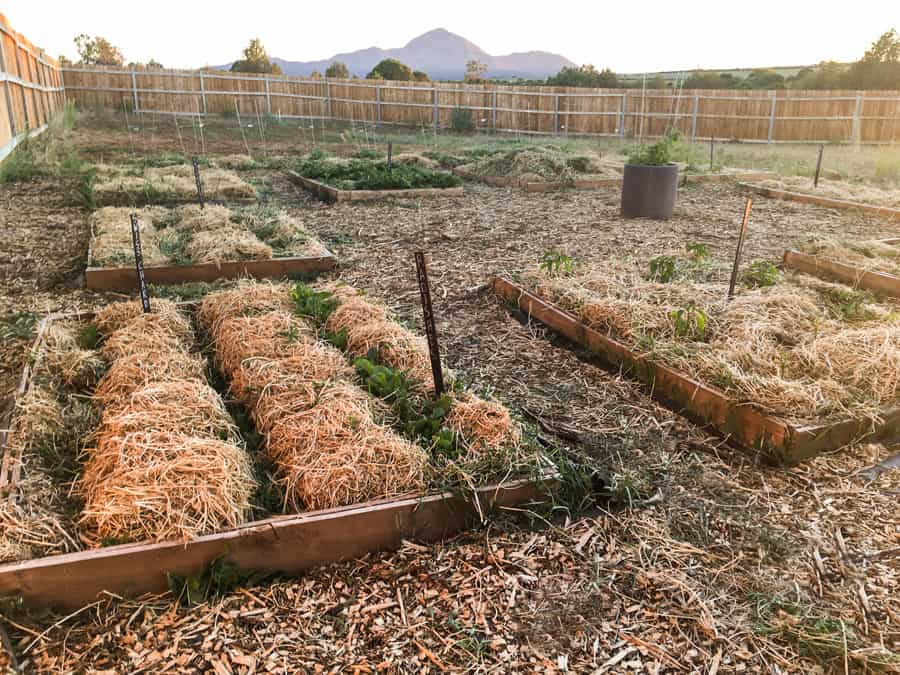 Deep Mulch Method for Gardening Part 1: Keeping Weeds at Bay