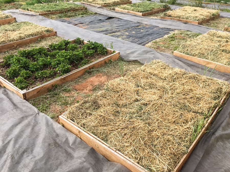 starting a raised bed mulched garden