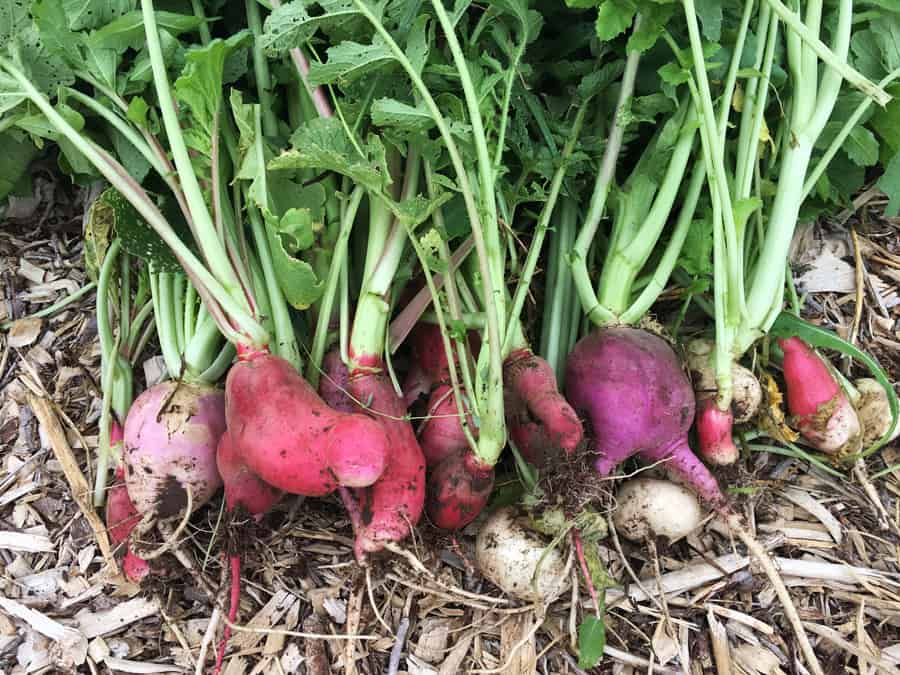 Do you have an abundance of vegetables in your garden? Click here to see what you can do with 9 different vegetables to keep your family healthy. Garden Vegetables   Abundant Harvest   Vegetable Recipes
