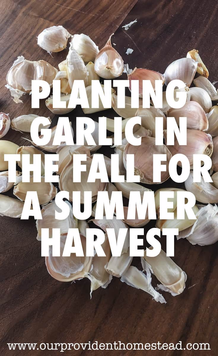 planting garlic pin