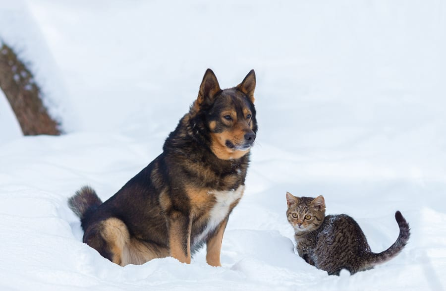 21 Resources to Help You Keep Your Animals Warm in the Winter