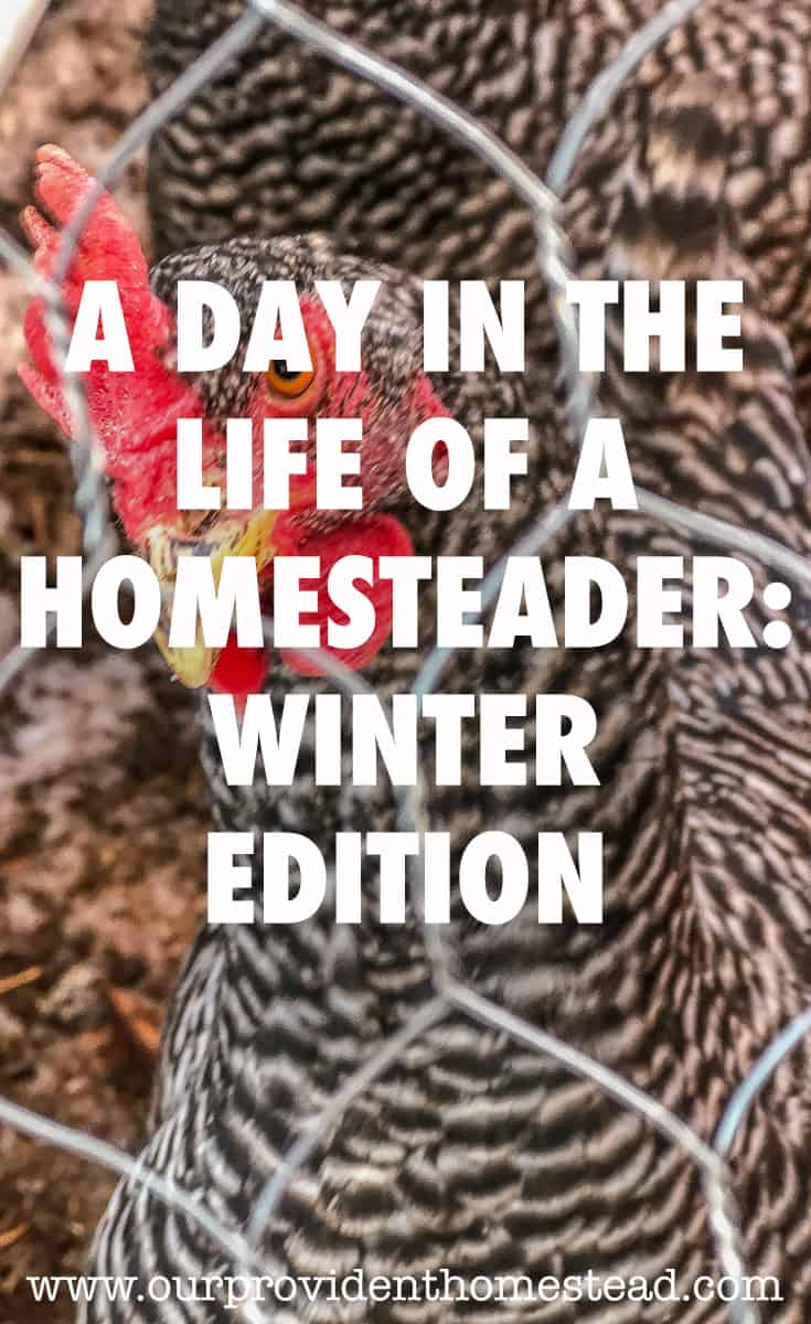 winter homestead pin