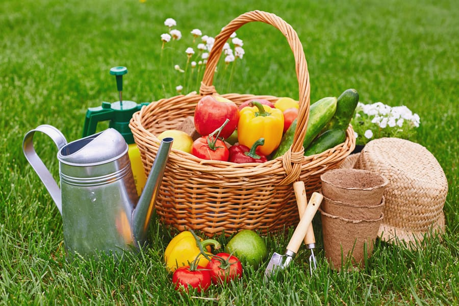 basket of vegetables in the grass with garden supplies