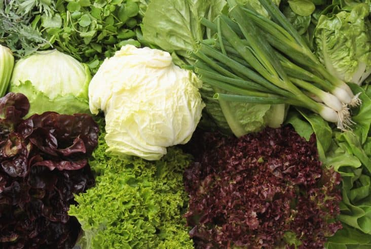an assortment of lettuces