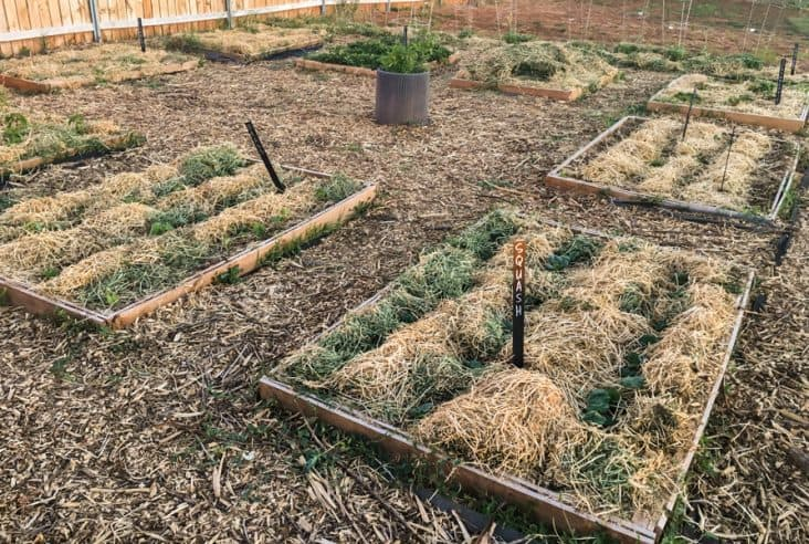 a raised bed garden with mulch