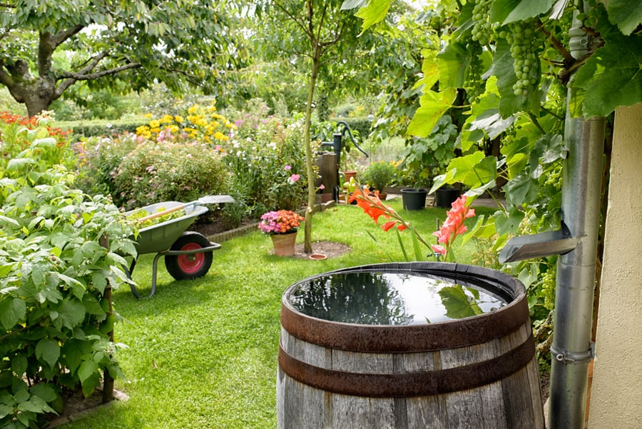a green garden with a rain barrel