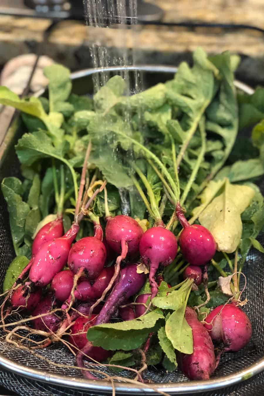 radishes washed in the sink