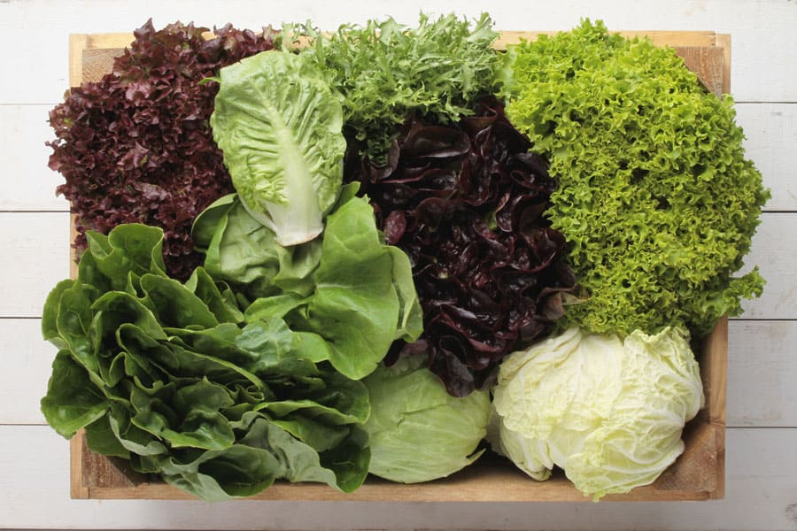 lettuce in a box