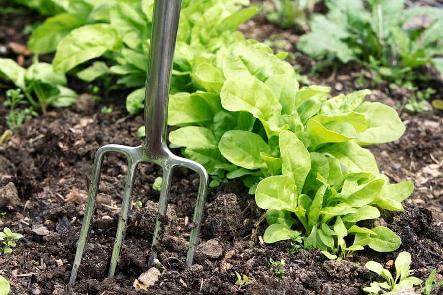 10 Common Beginner Gardening Mistakes You Should Avoid