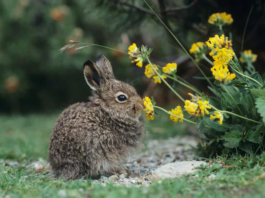 bunny eating a flower