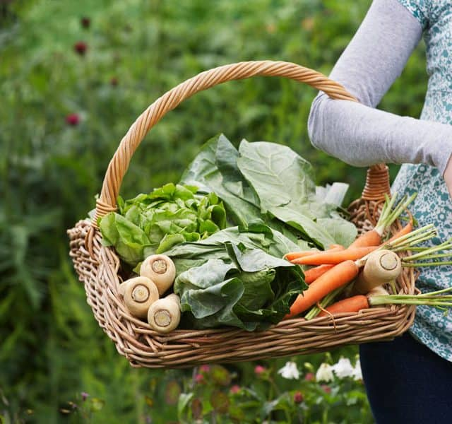 woman carrying basket of veggies