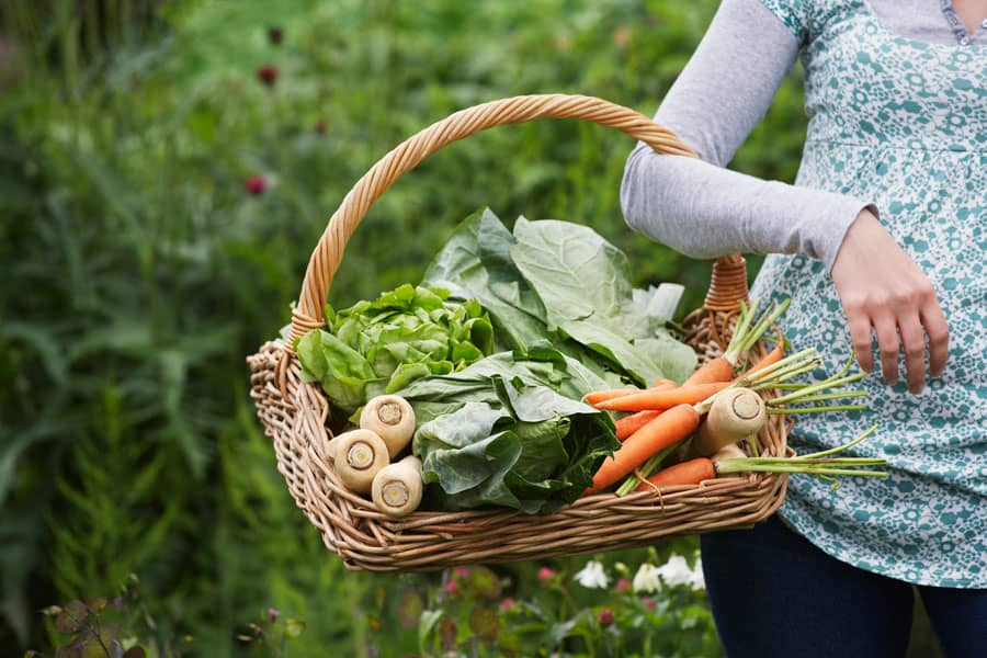 Troubleshooting 8 Common Vegetable Garden Problems for a Better Harvest