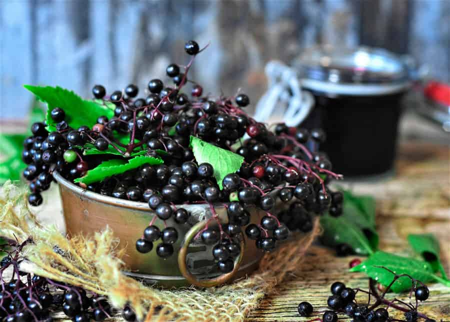 elderberries on a table
