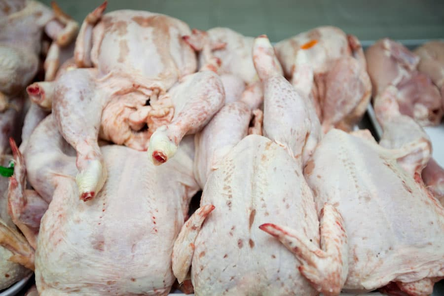 pile of butchered chickens